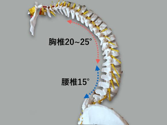 胸椎・胸郭 脊柱.003