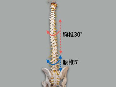 胸椎と腰椎の回旋可動域