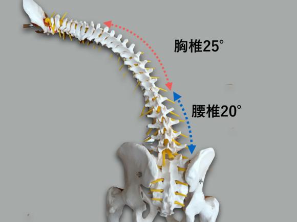 胸椎・胸郭 脊柱.005