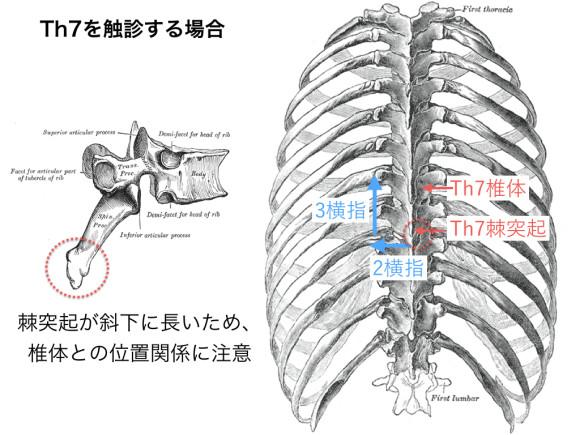 胸椎・胸郭.003