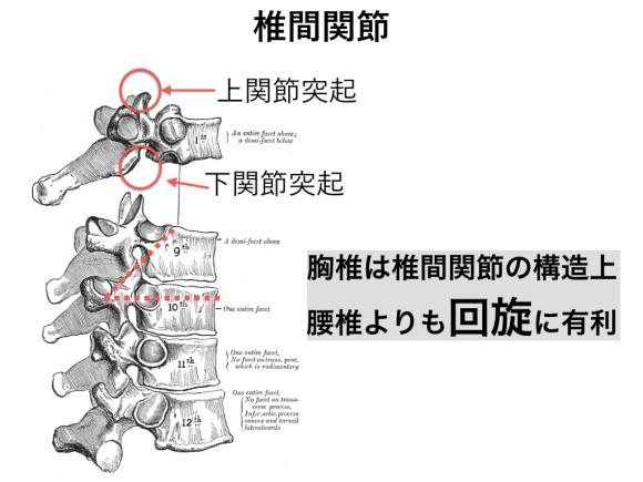 胸椎・胸郭.006