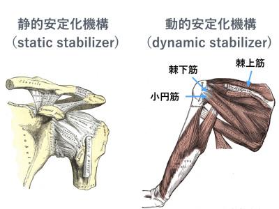 肩関節を安定させる機構