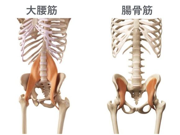 大腰筋と腸腰筋