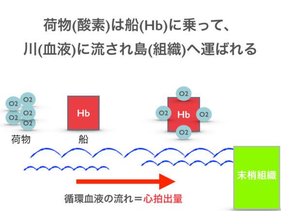 酸素・ヘモグロビン・血液・組織の関係