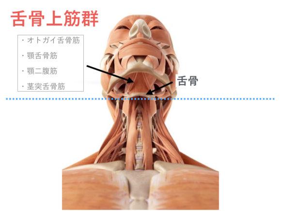 舌骨上筋群