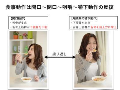 食事と舌骨上筋群