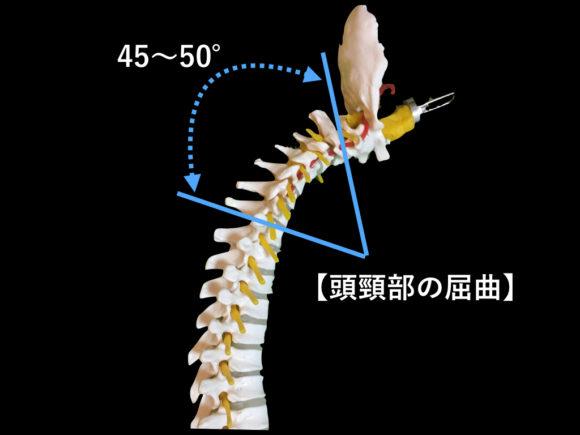 頭頸部の屈曲可動域