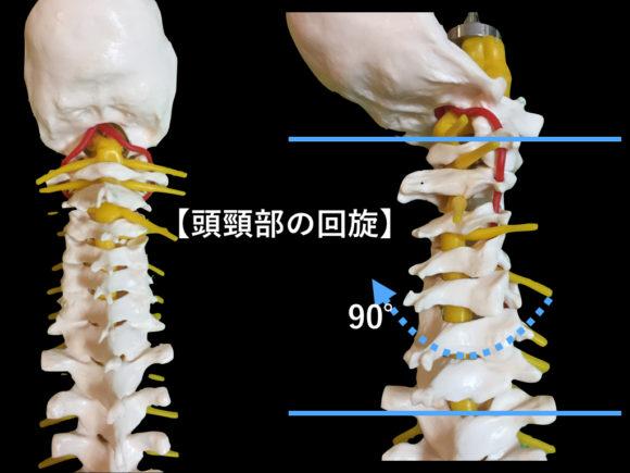 頭頸部の回旋可動域