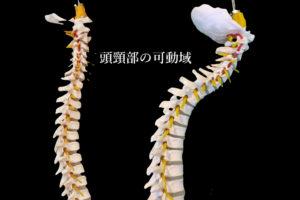 頭頸部の可動域.001