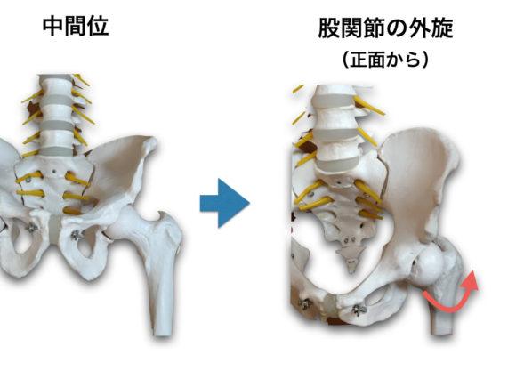 股関節外旋の動き