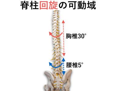 胸椎回旋エクササイズ.005